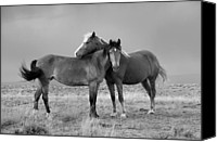 Horses Photographs Canvas Prints - Lean on Me black and white Canvas Print by Rich Franco