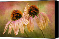 Flowers Pyrography Canvas Prints - Lean On Me Canvas Print by Donna Eaton