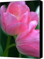 Pink Tulips Canvas Prints - Lean on Me Canvas Print by Kathy Yates
