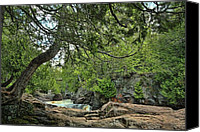 Forest Pyrography Canvas Prints - Leaning Cedar at Cascade River Canvas Print by Marvil LaCroix