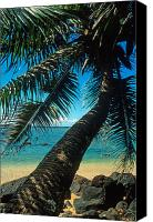 Beach Prints Canvas Prints - Leaning Palm on Anini Beach Canvas Print by Kathy Yates