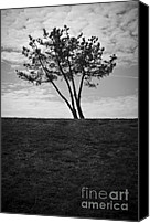 Grayscale Canvas Prints - Leaning Trees Canvas Print by Dave Gordon