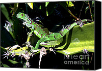 Acrobats Canvas Prints - Leapin Lizards Canvas Print by Karen Wiles