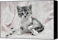 Kittens Mixed Media Canvas Prints - Learning to Sit Like a Lady Canvas Print by Elaine Manley
