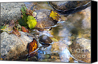 Creek Bed Canvas Prints - Leaves and Needles Canvas Print by Sharon  Talson
