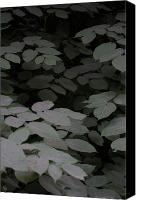 Featured Canvas Prints - Leaves Canvas Print by Chris Parks