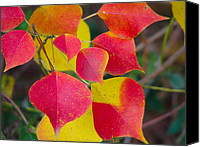Don L Williams Canvas Prints - Leaves Canvas Print by Don L Williams