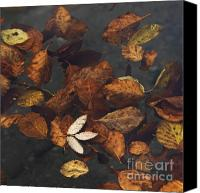 Leaf Pile Photo Canvas Prints - Leaves in a lake Canvas Print by Bernard Jaubert