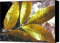 Akermans Art Canvas Prints - Leaves of Gold Canvas Print by Beth Akerman