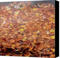 Leaf Pile Photo Canvas Prints - Leaves on a lake Canvas Print by Bernard Jaubert