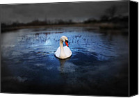 Blue Swan Canvas Prints - Left behind Canvas Print by Svetlana Sewell