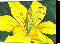 Floral Canvas Prints - Lemon Lily Canvas Print by Catherine G McElroy