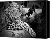 Animal Portrait Canvas Prints - Leopard Canvas Print by Cesar March