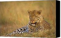 Five Canvas Prints - Leopard Canvas Print by Johan Elzenga