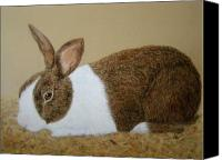 Rabbit Pastels Canvas Prints - Less Rabbit Canvas Print by Lynn Quinn