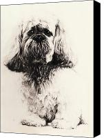 Cute Drawings Canvas Prints - Lhasa Canvas Print by Rachel Christine Nowicki