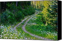 Aster Canvas Prints - Life Is A Journey On A Road Lined With Daisies Canvas Print by Karon Melillo DeVega