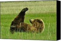 Kodiak Canvas Prints - Life is a Kick Canvas Print by Dennis Blum