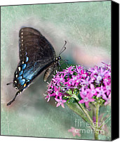 Pipevine Swallowtail Butterfly Digital Art Canvas Prints - Life is Sweet Canvas Print by Betty LaRue