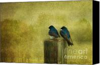 Swallow Canvas Prints - Life Long Friends Canvas Print by Reflective Moments  Photography and Digital Art Images