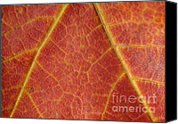 Leaf Pile Photo Canvas Prints - LifeBlood Canvas Print by Luke Moore