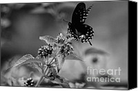 Butterfly On Flower Mixed Media Canvas Prints - Lift Off Canvas Print by Kim Henderson