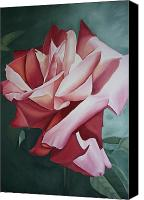 Red Rose Canvas Prints - Light Shadow Red Rose Flower Painting Canvas Print by Sally Holt