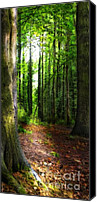Woodland Canvas Prints - Light Through The Trees Canvas Print by Meirion Matthias