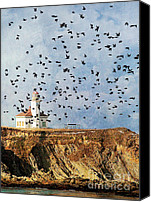 Oregpn Canvas Prints - Lighthouse Birds  Canvas Print by Billie-Jo Miller