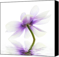 Flora Canvas Prints - Lightness Canvas Print by Kristin Kreet