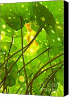 Vegetation Canvas Prints - Ligularia Tussilaginea Canvas Print by Carlos Caetano