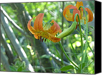 Estephy Sabin Figueroa Photo Canvas Prints - Lilies on a Sunny Morning Canvas Print by Estephy Sabin Figueroa