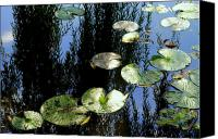 Lilly Pad Canvas Prints - Lilly Pad Reflection Canvas Print by Robert Harmon