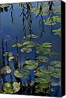 Lilly Pad Canvas Prints - Lilly Pads Canvas Print by Robert Harmon
