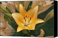 Buy Photos Online Canvas Prints - Lilly Canvas Print by Steven  Michael