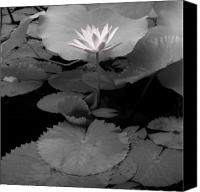 Lotus Pond Canvas Prints - Lily Bali Canvas Print by Andy Frasheski
