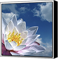 Water Lily Canvas Prints - Lily Flower Against Sky Canvas Print by Photo by Daveduke.