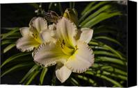 Macro Photography Canvas Prints - Lily Flower in Sunlight Canvas Print by Scott McGuire