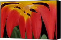 Dali Canvas Prints - Lily Melting Canvas Print by Rick Rauzi