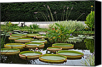 Lilly Pad Canvas Prints - Lily Pad Garden Canvas Print by Robert Harmon