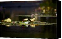 Lillies Canvas Prints - Lily Pond Canvas Print by Peter Tellone