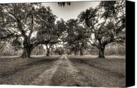 Live Oaks Canvas Prints - Limerick Plantation Live Oaks Canvas Print by Dustin K Ryan