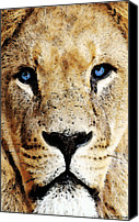 Lion Canvas Prints - Lion Art - Blue Eyed King Canvas Print by Sharon Cummings