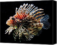 Lionfish Canvas Prints - Lionfish Canvas Print by Benjamin Yeager