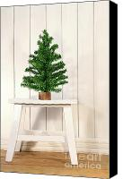 Magic Canvas Prints - Little green fir tree Canvas Print by Sandra Cunningham
