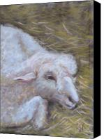 Rural Scenes Pastels Canvas Prints - Little Lamb Canvas Print by Wendie Thompson
