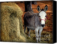 With Photo Canvas Prints - Little Pedro Canvas Print by Karen Wiles