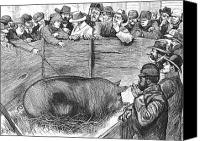 Pig Photo Canvas Prints - Livestock Show, 1883 Canvas Print by Granger