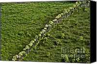 Rural Scenes Canvas Prints - Living Fence Canvas Print by Heiko Koehrer-Wagner