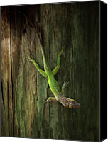 Lizard Canvas Prints - Lizard Canvas Print by HenrikWintherAndersen